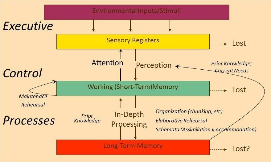 Information Processing.jpg